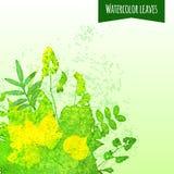 Aquarell-Blätter Lizenzfreie Stockfotografie