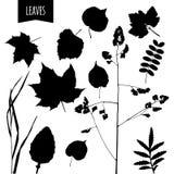 Aquarell-Blätter Lizenzfreies Stockfoto