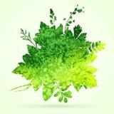 Aquarell-Blätter Stockfoto