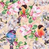 Aquarell blüht Apfel mit Vogel Bullfinch Nahtloses mit Blumenmuster auf einem rosa Hintergrund Lizenzfreie Stockbilder
