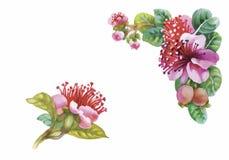 Aquarell blüht in der klassischen Art auf einem weißen Hintergrund Lizenzfreie Stockbilder