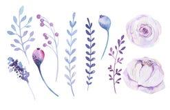 Aquarell boho Blumensatz Frühlings- oder Sommerdekoration Blumenb Stockfotografie