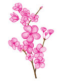 Aquarell Cherry Blossom vektor abbildung