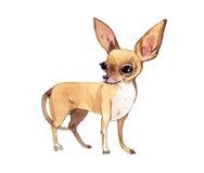 Aquarell-Chihuahua Stockbilder
