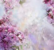 Aquarell, das rosa Aprikosenbaumblume malt Stockfotografie