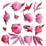 Aquarell, das rosa Pfingstrosenblumen zeichnet Lizenzfreie Stockfotografie