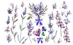 Aquarell eingestellt mit Lavendelblumen lizenzfreie abbildung