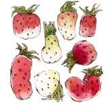 Aquarell-Erdbeeren eingestellt Lizenzfreies Stockfoto