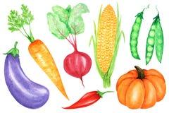 Aquarell gemalte Sammlung Gem?se Gestaltungselemente des Handgezogene neue strengen Vegetariers Nahrungsmittellokalisiert auf wei stockbild