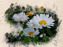 Aquarell gemalte weiße Gänseblümchen stock abbildung