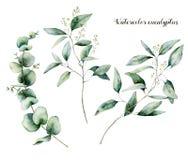 Aquarell gesäter Eukalyptussatz Handgemalte Eukalyptusniederlassung und -blätter lokalisiert auf weißem Hintergrund floral stock abbildung