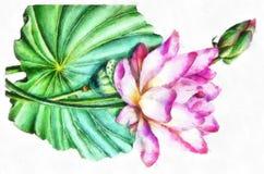 Aquarell-große Blätter und exotische und zarte Handmalerei-Blume Bud For Pink Lotus Paintings Stockfotos