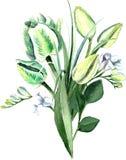 Aquarell-Hand gezeichneter weißer Tulpen-Blumenstrauß Lizenzfreie Stockfotografie