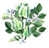 Aquarell-Hand gezeichneter weißer Tulpen-Blumenstrauß Lizenzfreies Stockbild