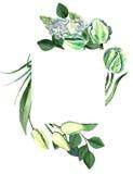 Aquarell-Hand gezeichneter weißer Tulpen-Rahmen Lizenzfreie Stockbilder