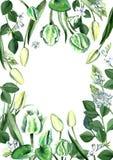 Aquarell-Hand gezeichneter weißer Tulpen-Rahmen Stockbild