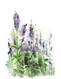 Aquarell - Lavendelfeld Stockfotografie