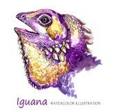 Aquarell-Leguan auf dem weißen Hintergrund Exotisches Tier stock abbildung