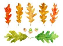 Aquarell lokalisierte Herbstlaub und Eicheln stock abbildung