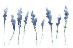 Aquarell lokalisierte Lavendelniederlassungen Lizenzfreies Stockfoto