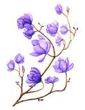 Aquarell-Magnolien-Blume lizenzfreie abbildung
