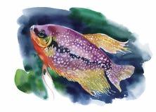 Aquarell-Meeresflora und -fauna-Hintergrund mit tropischen Fischen Stockfotografie