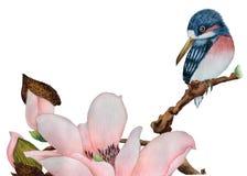 Aquarell mit einem Vogel auf einer Magnolie stockfotografie