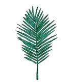 Aquarell-Palmblätter Lizenzfreies Stockbild