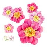 Aquarell-Pfingstrose lokalisiert auf Weiß Hand gezeichnetes Blumenelement Stockfotos