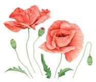 Aquarell Poppy Flower Set Stockbilder
