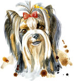 Aquarell-Porträt des Zucht-Hundes Yorkshires Terrier Lizenzfreie Stockbilder
