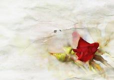 Aquarell rosafarben und Knospen Stockfoto