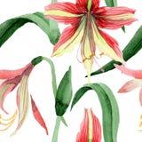Aquarell rote hippeastrum Blume Botanische mit Blumenblume Nahtloses Hintergrundmuster lizenzfreie abbildung