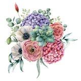 Aquarell saftig und Hortensieblumenstrauß Handgemalte Rosa- und violetteblumen, Kakteen, Anemone und Ranunculus mit stock abbildung