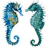 Aquarell Seahorses stock abbildung