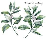 Aquarell Snowberrysatz Handgemalte Snowberryniederlassung mit der weißen Beere lokalisiert auf weißem Hintergrund Weihnachten lizenzfreie abbildung