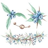 Aquarell Stammes- Berry Illustrations Set Lizenzfreie Stockfotos
