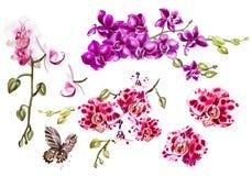 Aquarell stellte mit unterschiedlichen tropischen Orchideen und Schmetterling ein Stockfotografie