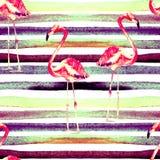 Aquarell streift nahtloses Muster mit Flamingo Stockfotografie