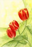 Aquarell. Tulpen. lizenzfreie abbildung