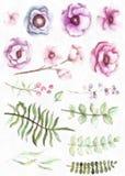 Aquarell und Blätter in der Weinlese-Art-Blumensammlung mit Blumen-Beeren Stockbilder