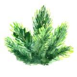 Aquarell-Weihnachtsbaumast Handgemalte Tannenadelelemente lokalisiert auf weißem Hintergrund Stockbild