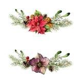 Aquarell-Weihnachtsflorenelementsatz Weinleseartwinter stellte mit Weihnachtsbaumasten, Hellebore, Stechpalme ein Stockfotografie