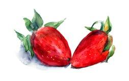 Aquarellabbildung der Erdbeere Stockfotos