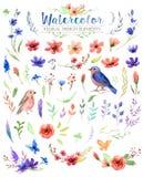 Aquarellaquarellblumen und -blätter lizenzfreie abbildung