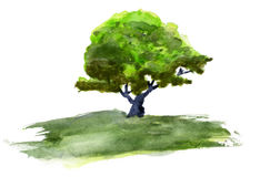 Aquarellbaum Stockfoto