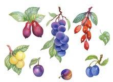 Aquarellbeeren, Pflaume und andere Frucht auf weißem Hintergrund Lizenzfreies Stockfoto
