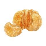 Aquarellbild der Mandarine mit zwei Segmenten Lizenzfreie Stockfotos
