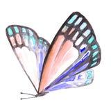 Aquarellbild eines Schmetterlinges auf einem weißen Hintergrund Lizenzfreie Stockbilder