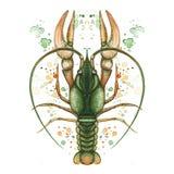 Aquarellbild von Krebs, Krebs, Hummer, Sternzeichen, Flusskrebs, ausführliche Illustration, Makro, Spray, Grün, Druck an stock abbildung